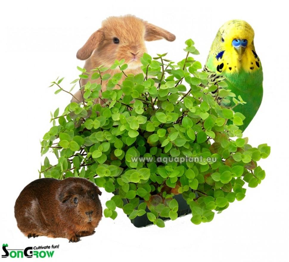 Yamiplant with animals klein 800.jpg