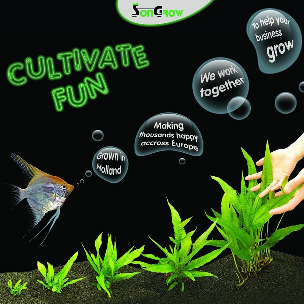cultivate fun.jpg