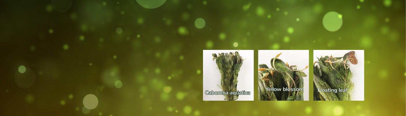 homepage background groen 1400x400 met foto.jpg