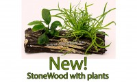 stonewood with plants new homepage teaser.jpg