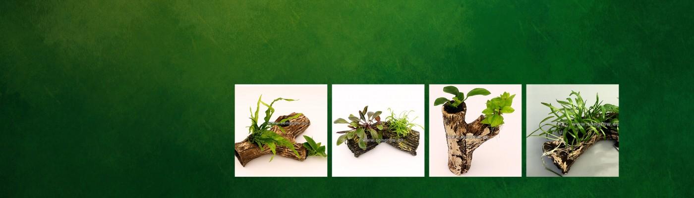 homepage beplant stonewood.jpg