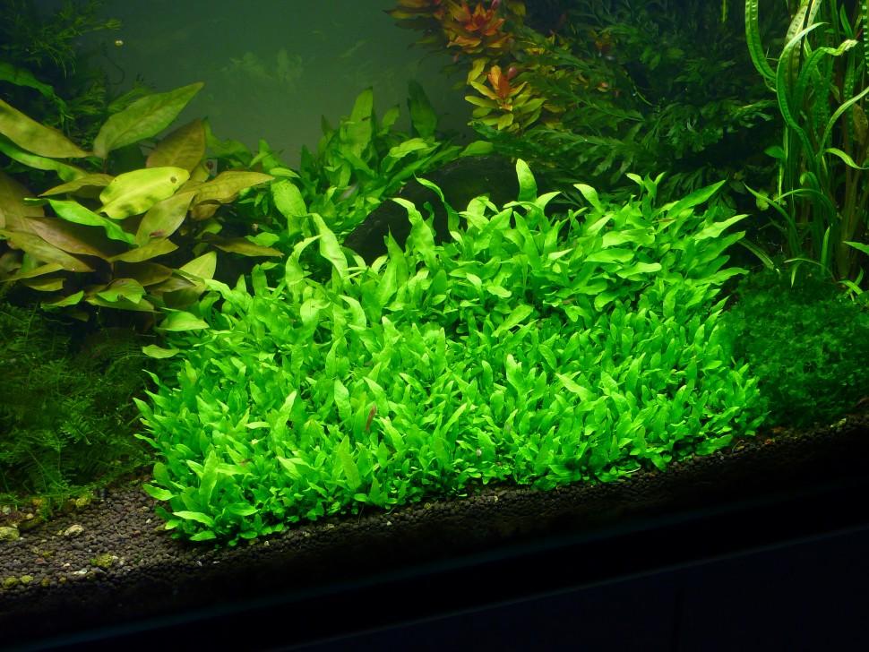 epaqmat aquarium 1.jpg