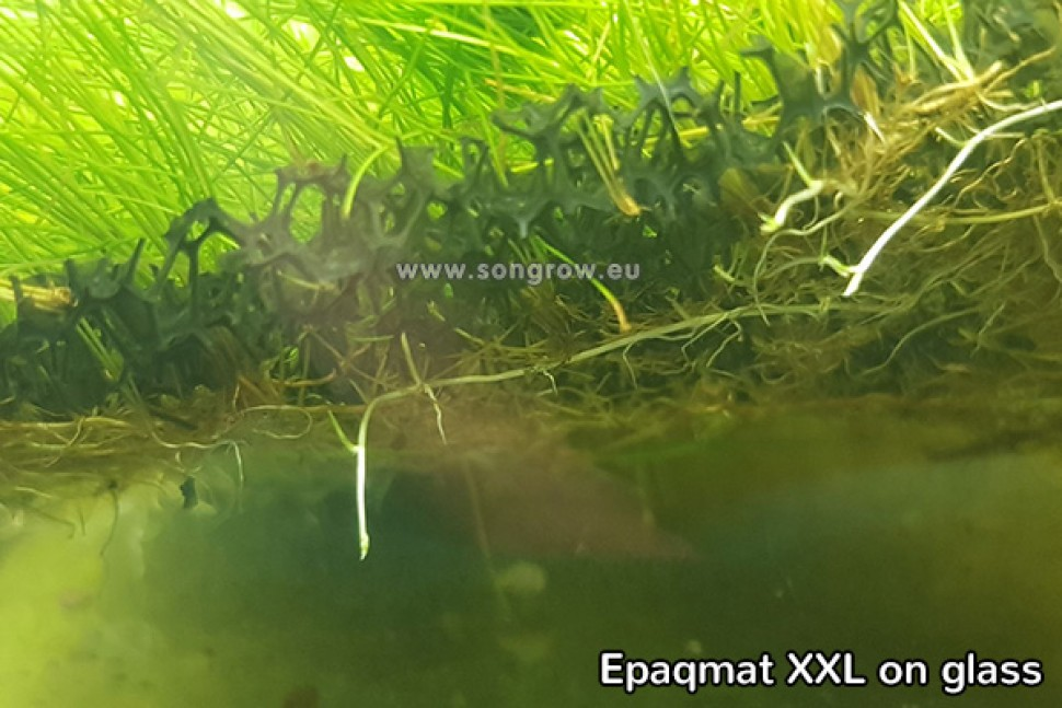 Epaqmat XXL grow.jpg