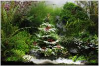 kerstboom.jpg