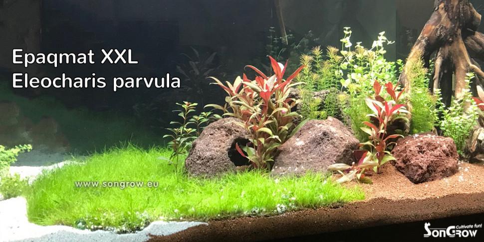 E220 aquarium.jpg