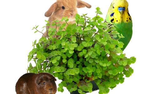 6200 Yamiplant with animals zonder watermerk.jpg